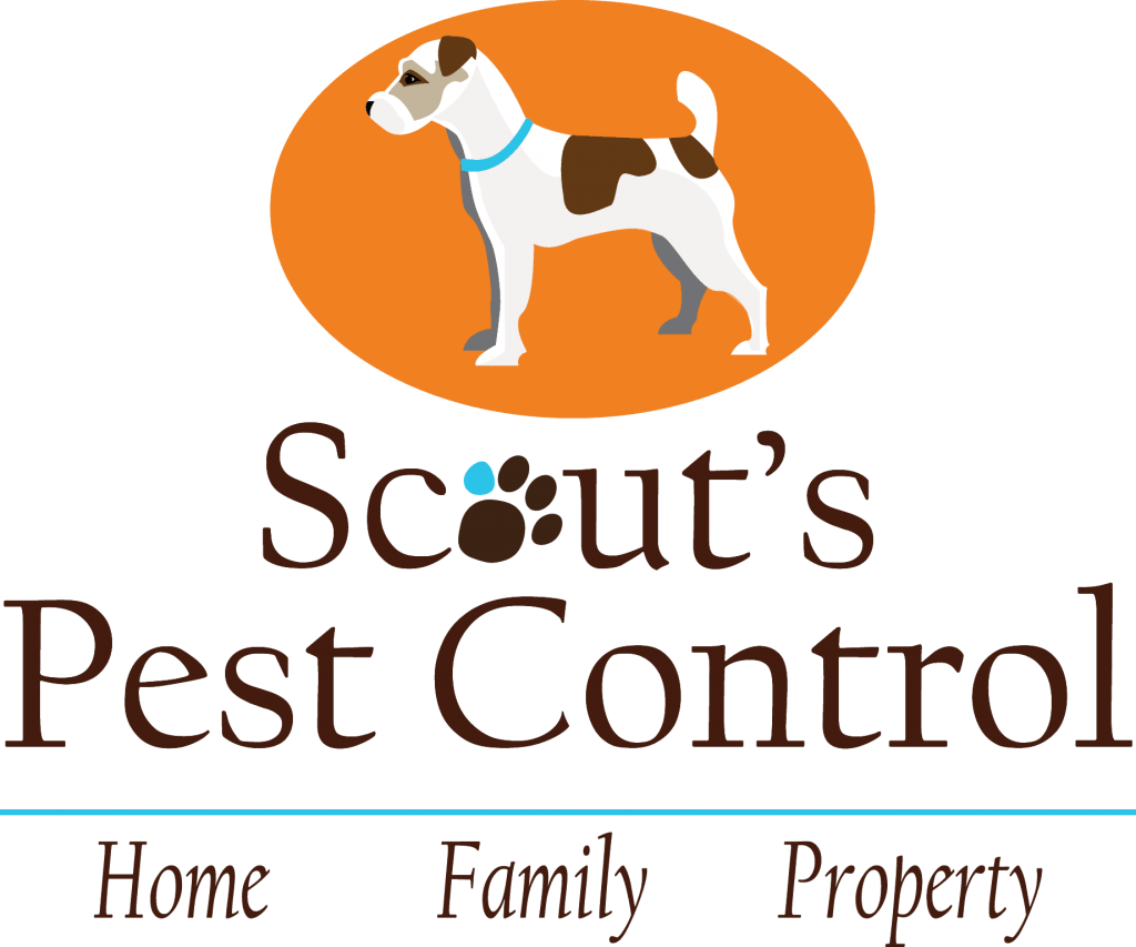 scouts pest control