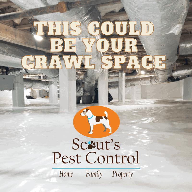 fall pest control - crawl space encapsulation