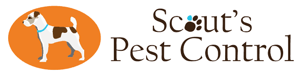 scouts pest control greenville sc