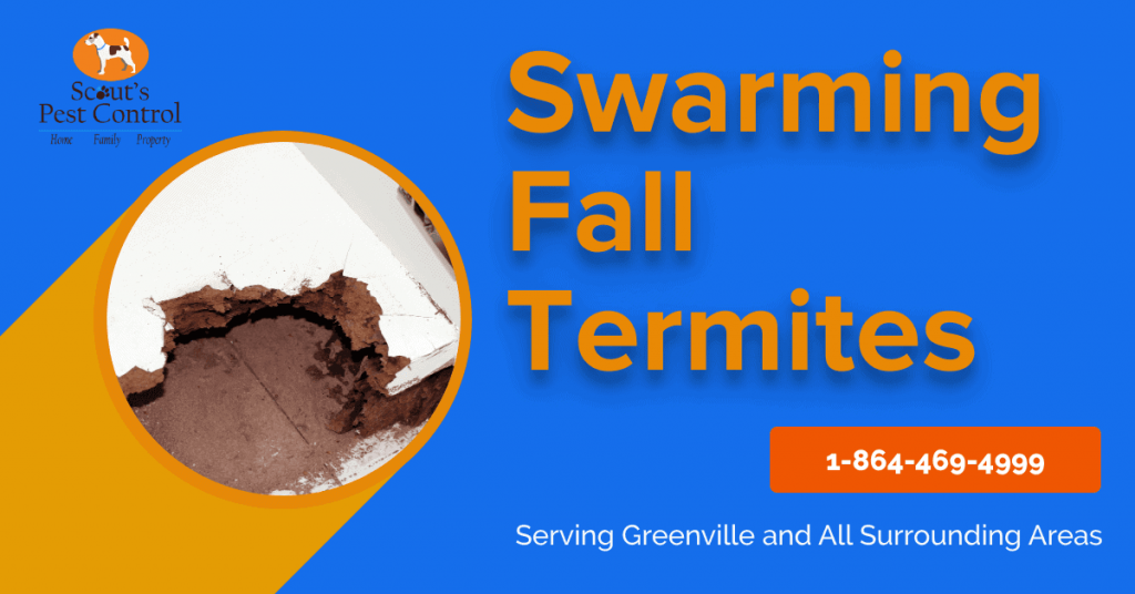 do termites swarm in the fall season?