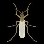 mosquito control greenville sc
