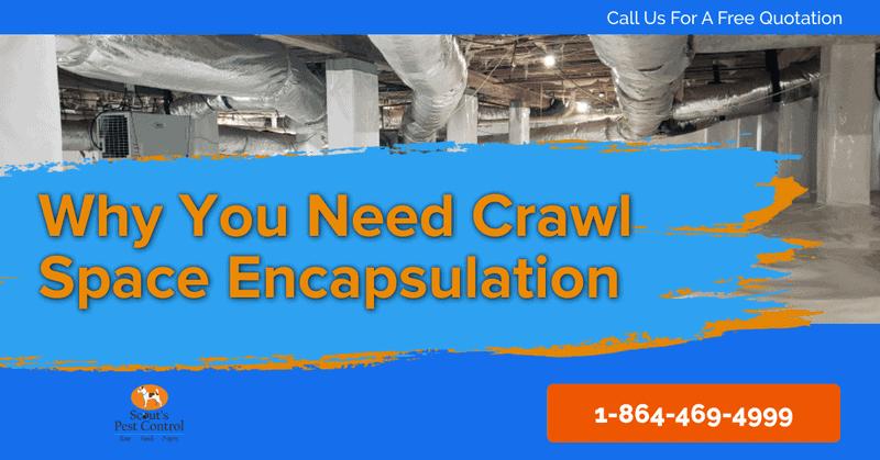 crawl space encapsulation - crawl space vapor barrier