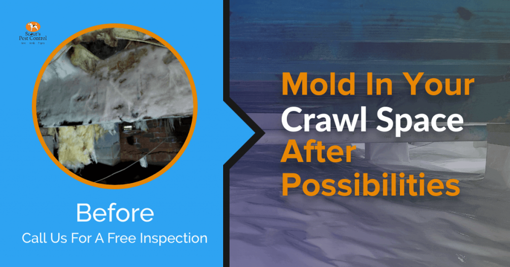 Crawl Space Mold, Rot and Fungus