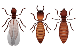 termite control greenville sc