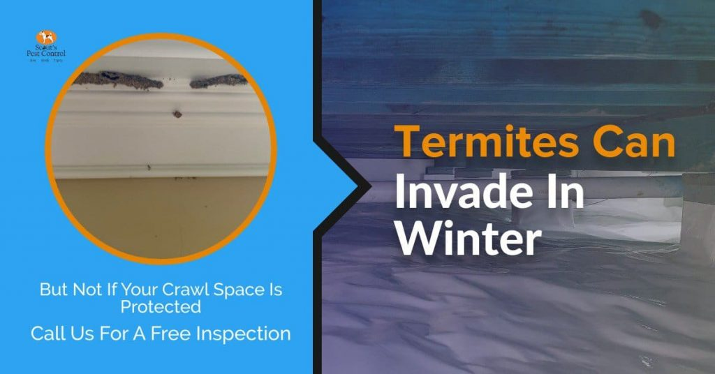 termites in winter