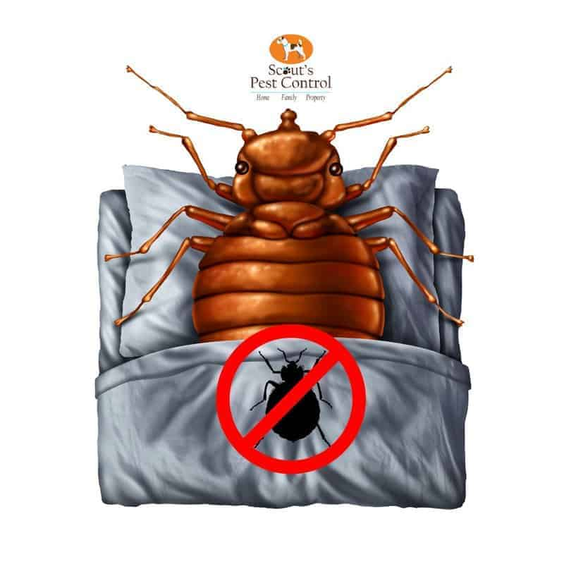 destroy bed bugs