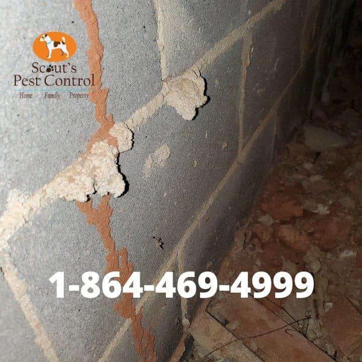 termite bonds and termite renewals