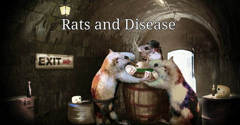 how do rats get into your home