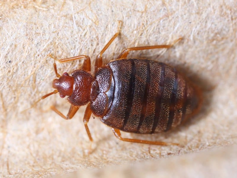 does bed bug heat treatment work