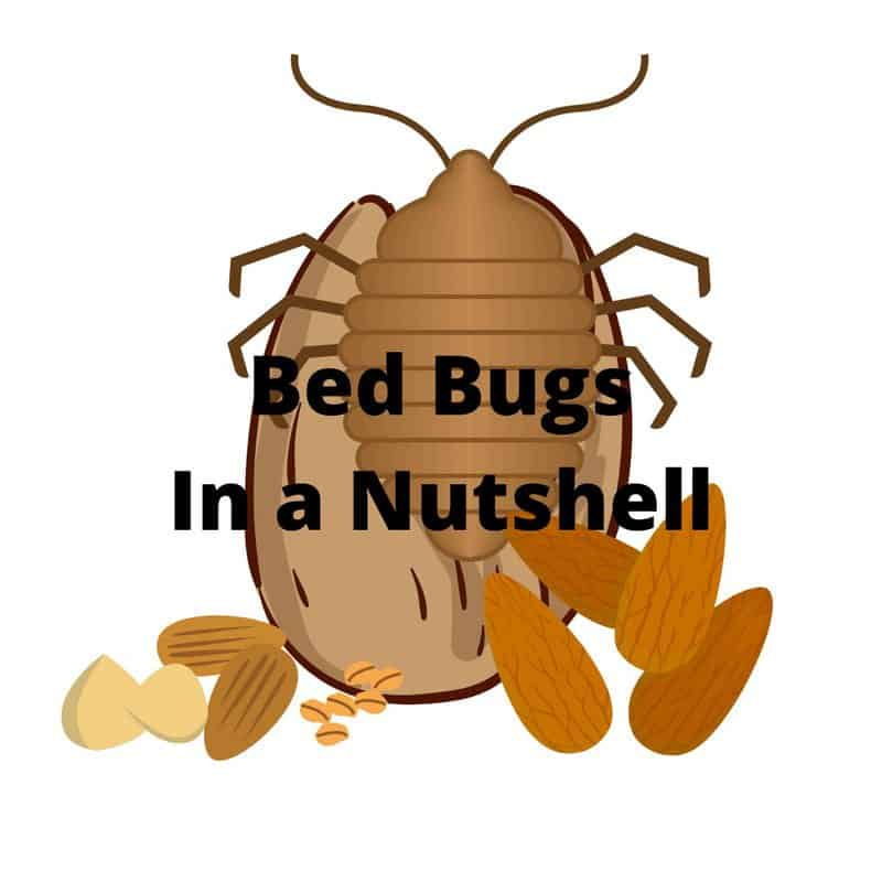 does bed bug heat treatment work?