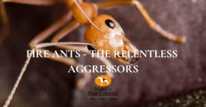 invading fire ants