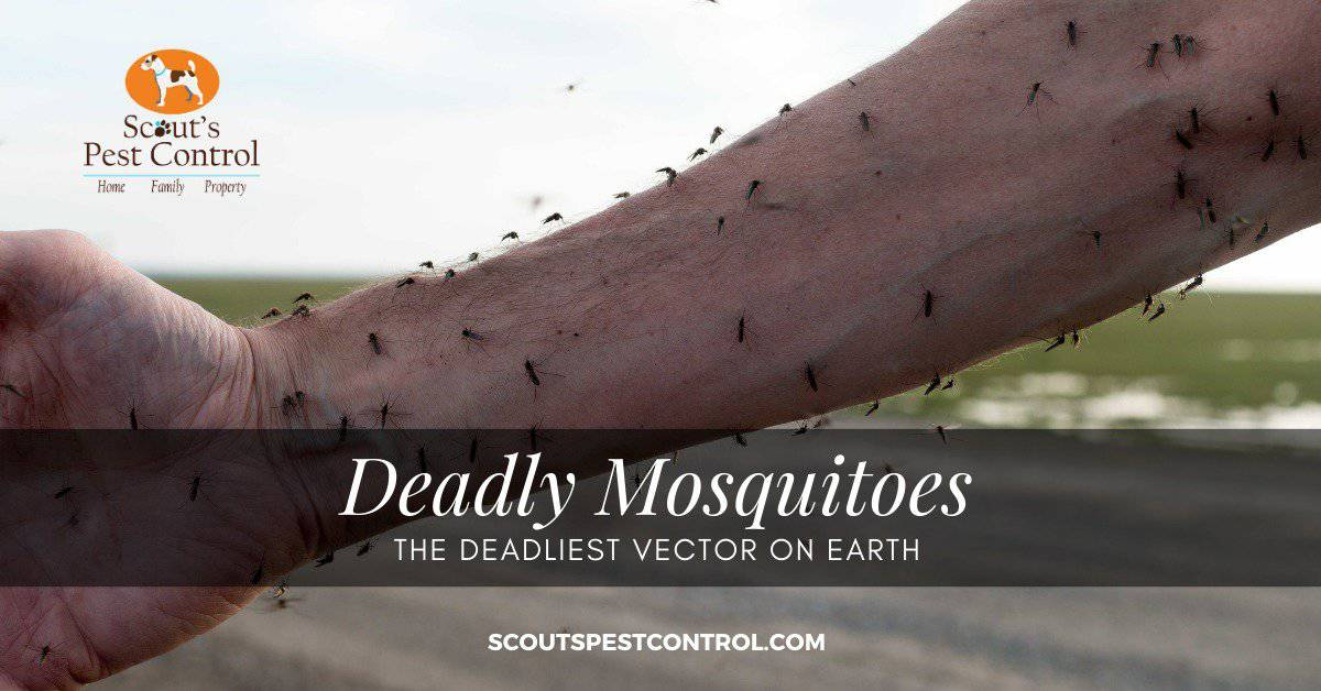 deadly mosquitoes
