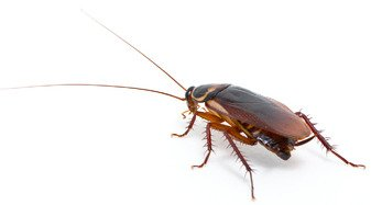 dangers of cockroaches in your home or business