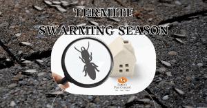 Termite Swarming Season