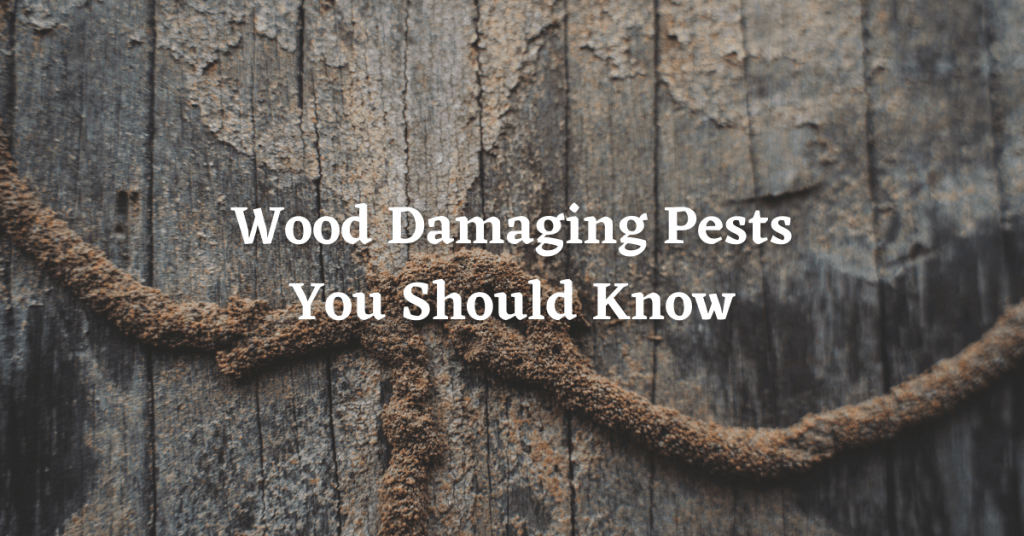 wood damaging insects in south carolina