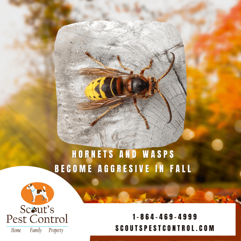 why you need fall pest control