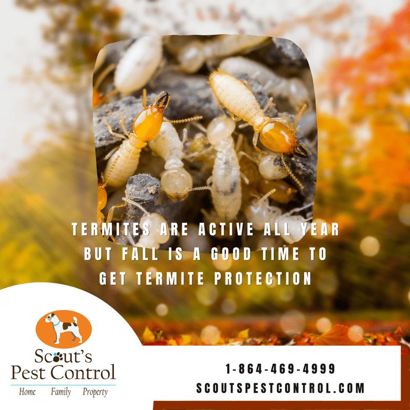 fall pest control - termites