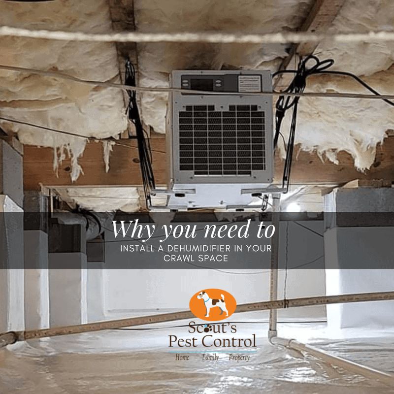 why you need to install a dehumidifier in your crawl space!