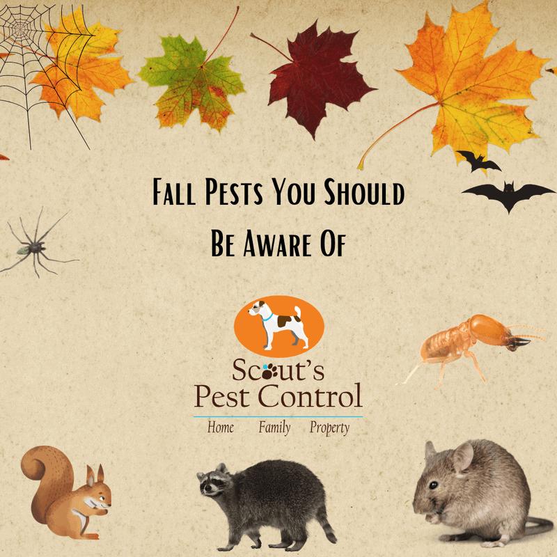 fall pests