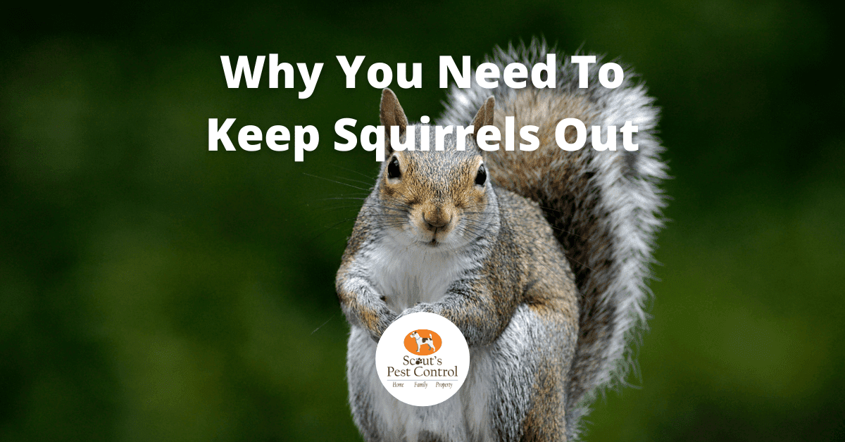 get squirrels out